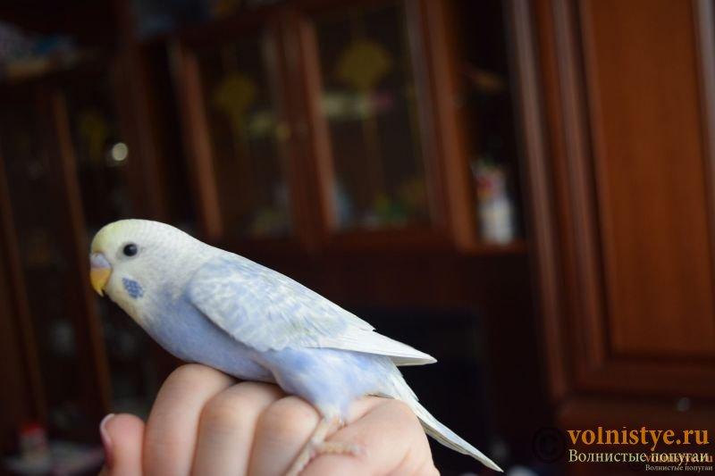 Радужная красота - птенцы от Тора и Мелисы - DSC_8371.JPG