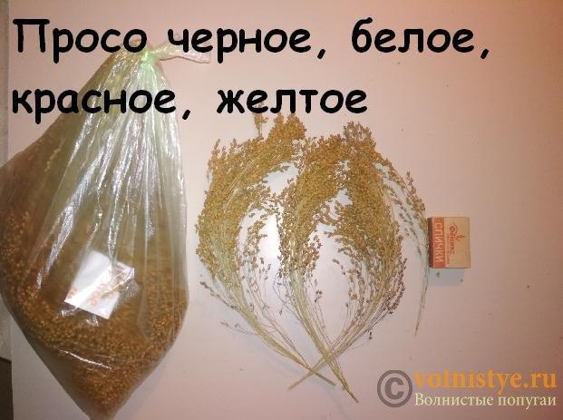 Продам колоски. Нижегородская обл. г. Выкса - IMG_20191014_190227.jpg