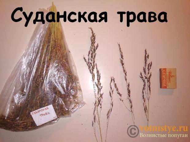 Продам колоски. Нижегородская обл. г. Выкса - IMG_20191014_190653.jpg