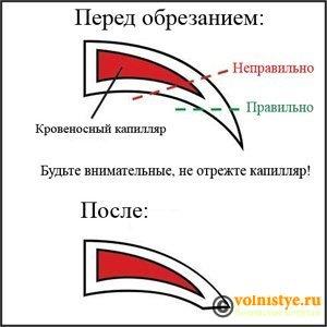 Белые наросты на лапках - obrezanie-kogtja.jpg