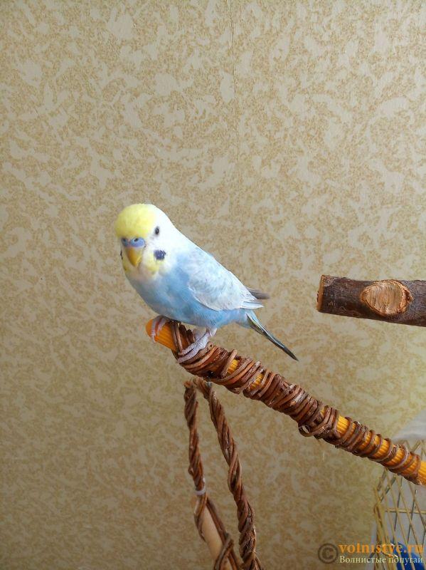 История появления нашей птички - изображение_viber_2020-05-13_11-57-33.jpg