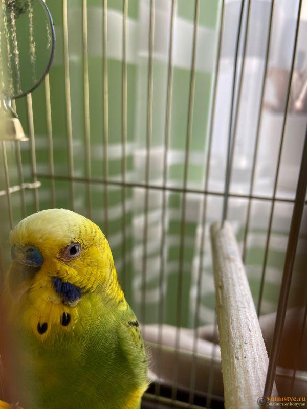 У попугая выпали перья возле глаз - 73B96578-556B-4558-9618-2444D66E7347.jpeg
