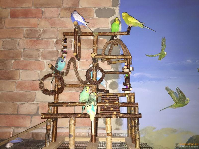 Стенд игровой для попугаев - IMG_7358.JPG