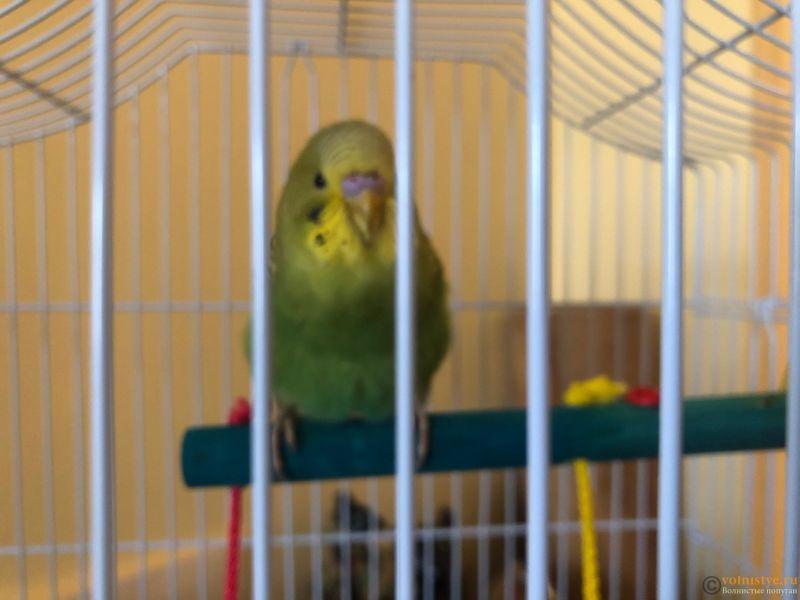 Помогите определить что с попугайчиком - 20A09CD9-328C-4932-88D9-1A0599C55527.jpeg