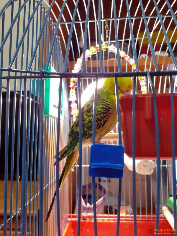 Помогите определить здоров ли попугай? - 2 - 20200729_202508[1].jpg