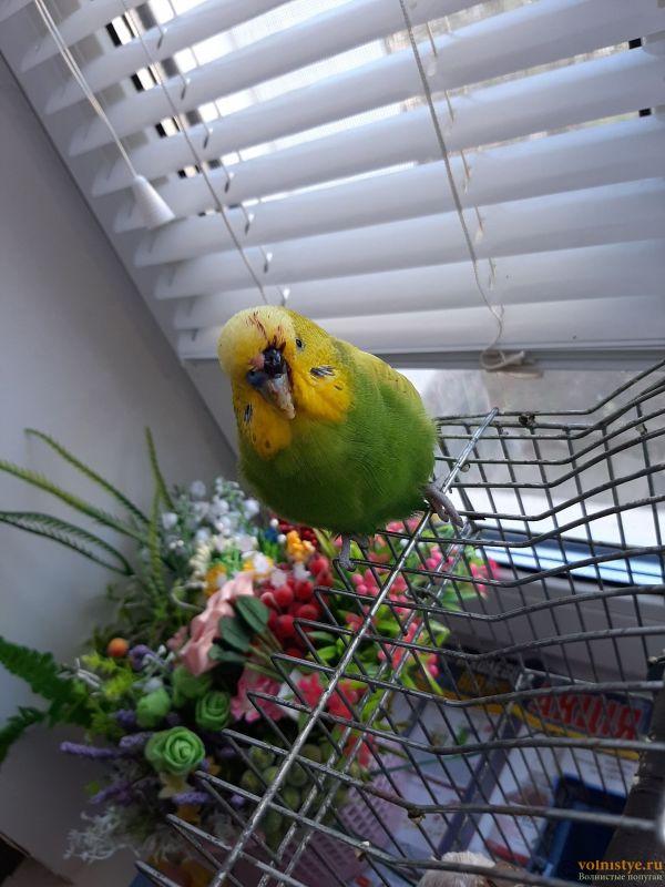 У попугая идет кровь из ноздрей - 20201124_111211.jpg