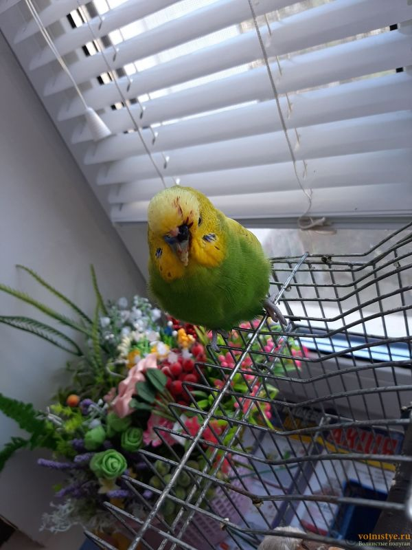 У попугая идет кровь из ноздрей - 20201124_111209.jpg