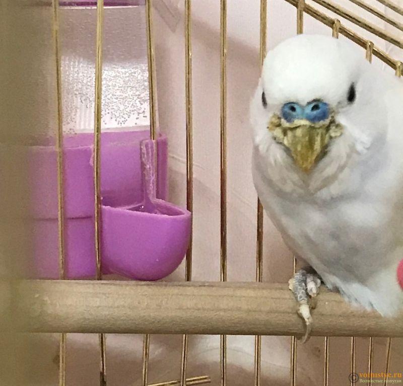 У попугая проблемы с клювом - 1EGwTlVe6Fg.jpg