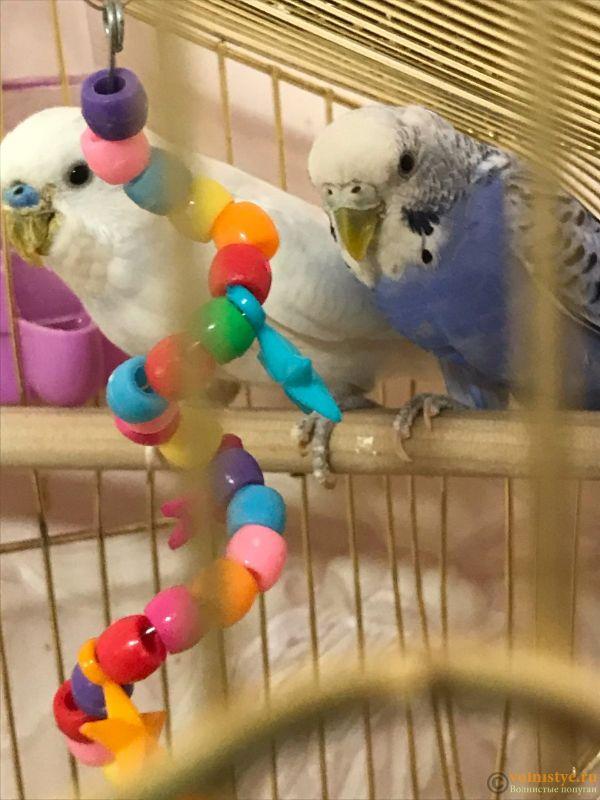У попугая проблемы с клювом - раз.jpg