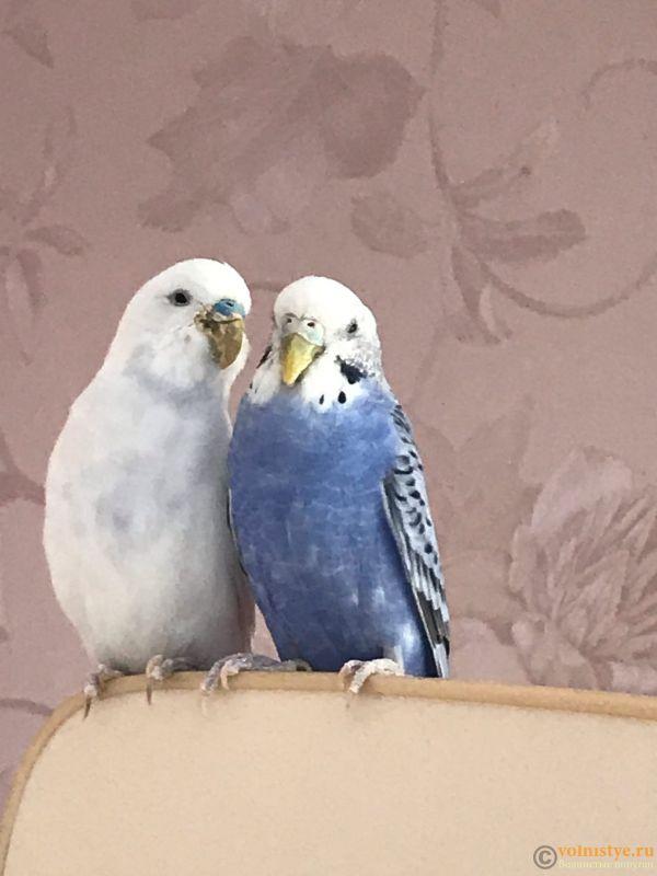 У попугая проблемы с клювом - два.jpg
