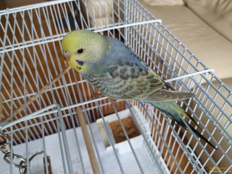 Продам самочку птенец (родилась 18.12.20) радужного попугая - IMG_20210120_111120.jpg