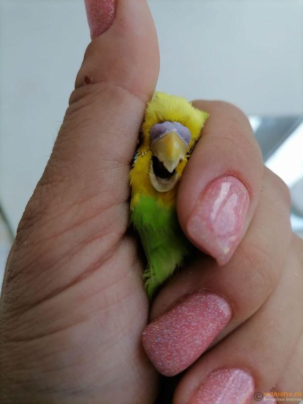 Подскажите, у попугая клещ? - 3 - IMG_20210519_114235.jpg