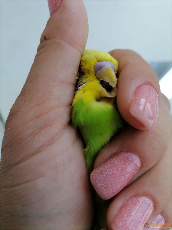 Подскажите, у попугая клещ? - 3 - IMG_20210519_114233.jpg