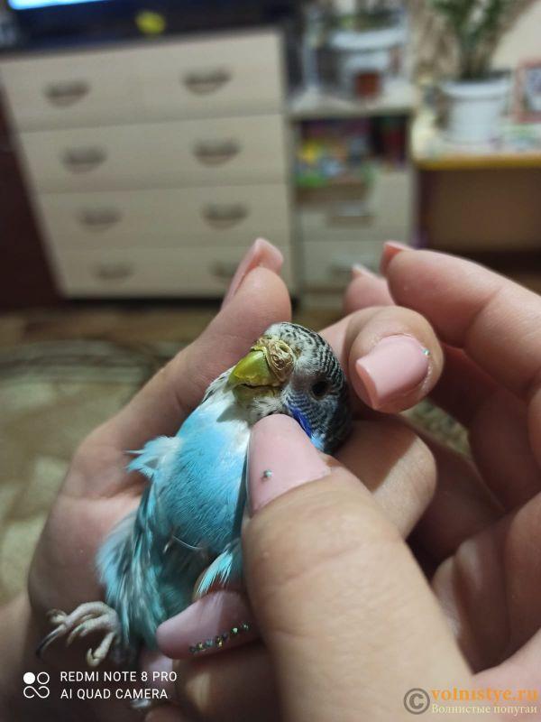 Коротко о содержании волнистого попугая, для тех, кто не любит много читать - IMG-20210520-WA0001.jpg