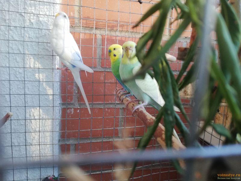 Беременность попугаев - IMG_20210701_202709.jpg