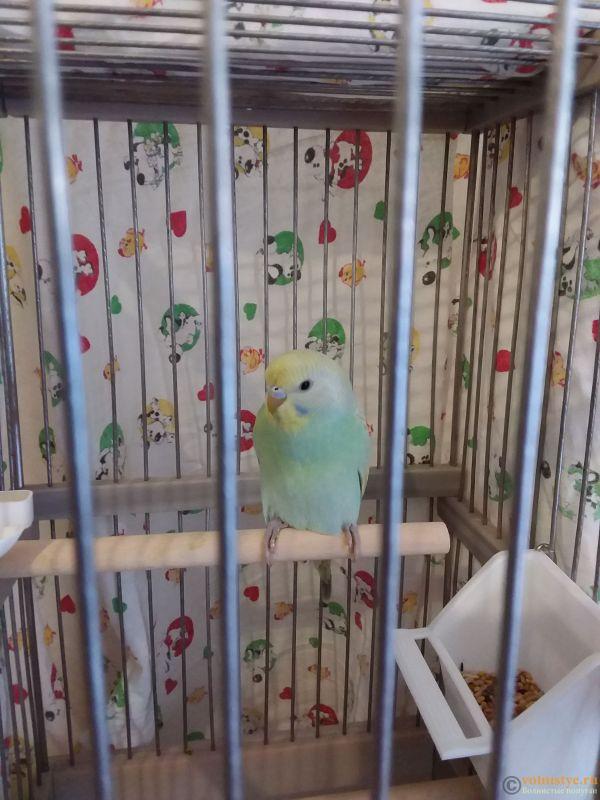 Фотографии  для статьи  окрасы волнистых попугаев - 20210713_131445.jpg