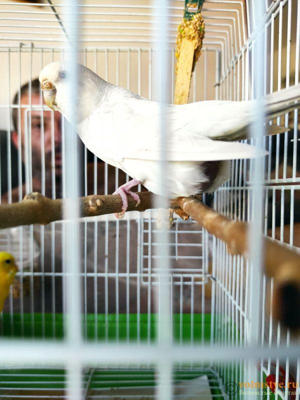 Беременность попугаев - IMG-20210702-WA0008.jpg