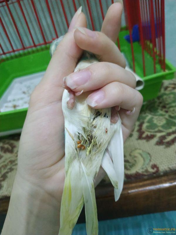 Волнистый попугай умирает - IMG_20210721_142605.jpg