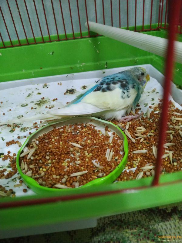 Волнистый попугай умирает - IMG_20210721_142538.jpg