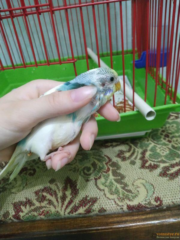 Волнистый попугай умирает - IMG_20210721_142613.jpg