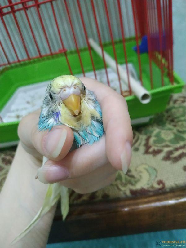 Волнистый попугай умирает - IMG_20210721_142607.jpg