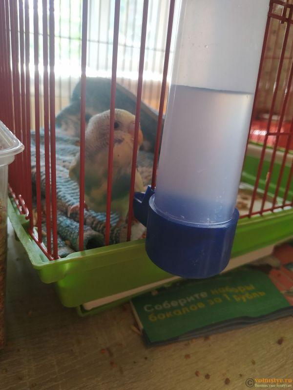 Волнистый попугай умирает - IMG_20210722_153742.jpg