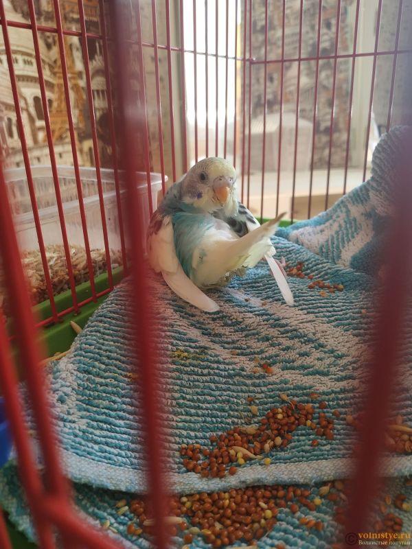 Волнистый попугай умирает - IMG_20210722_152135.jpg