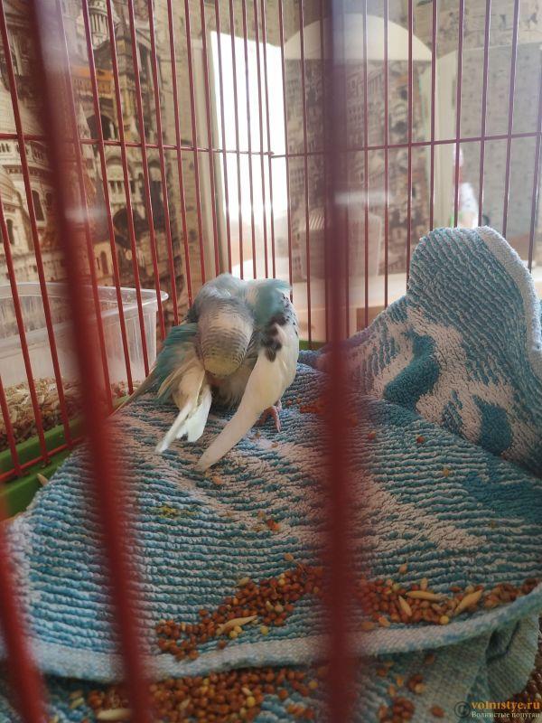 Волнистый попугай умирает - IMG_20210722_152054.jpg