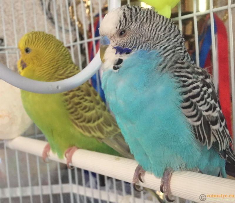 глаз попугая, он держит один глаз полузакрытым - 03D97310-8537-4433-8DFD-8B2233DB9820.jpeg