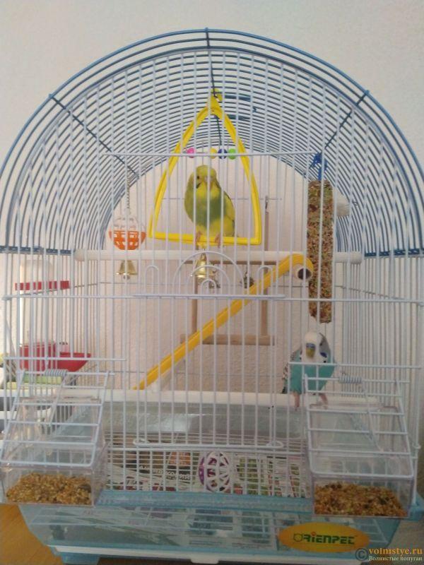 Поведение самки волнистого попугая - IMG_20210915_102858.jpg