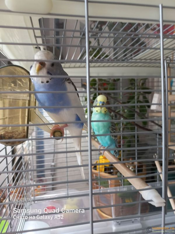 Жидкий помёт у попугаев - 20211006_133442.jpg