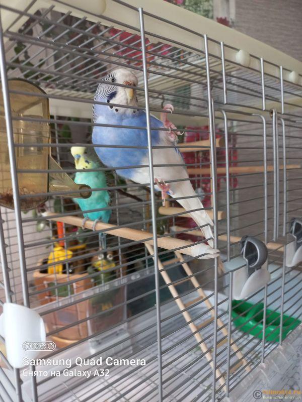 Жидкий помёт у попугаев - 20211006_133406.jpg