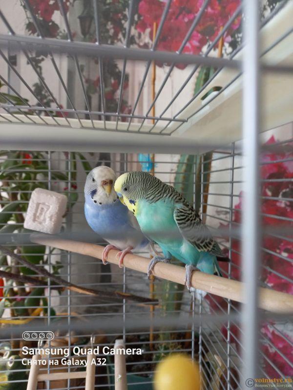 Жидкий помёт у попугаев - 20211006_133024.jpg