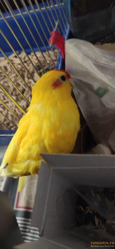Папуга какарик прихворіла - IMG_20211013_094430.jpg