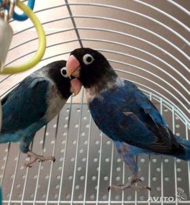 фото птиц - Vxy6dJwj9Xc.jpg
