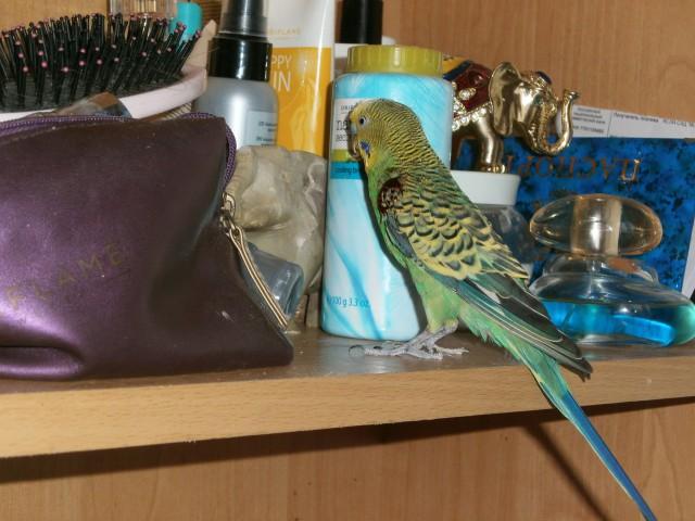У попугая идёт кровь с крылышек - PC220038.JPG