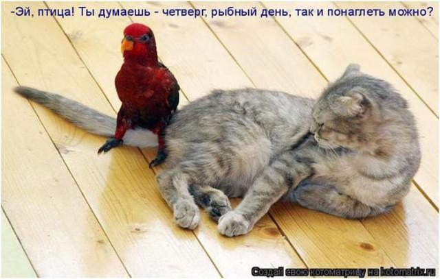 Смешинки на попугая птичью тему - 88803550_062812_1428_13.jpg