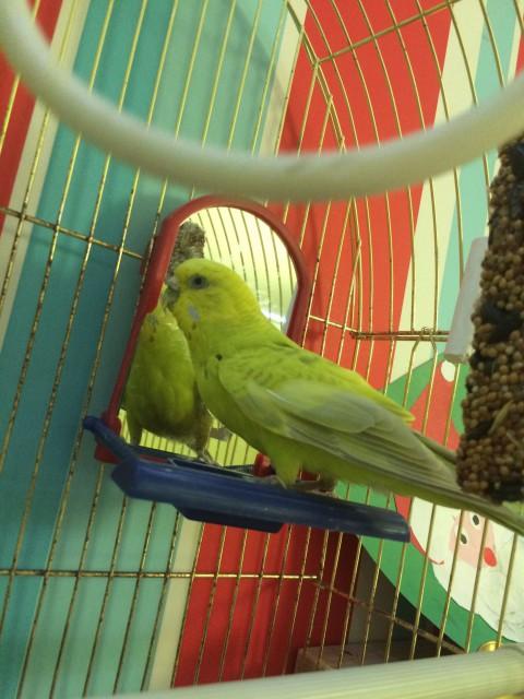 Гиперкератоз у попугая - IMG_8454.JPG