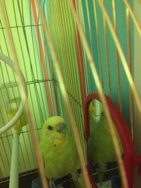 Гиперкератоз у попугая - IMG_8456.JPG