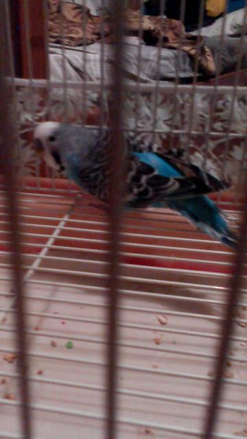 У попугая что-то с Хвостом,и лапкой. - IMG_20150127_204449.jpg