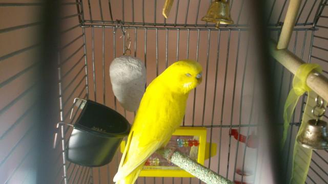 наш попугай - DSC_0377.jpg
