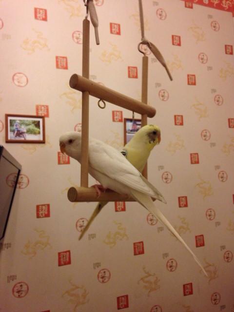 Обожают такие качели)) - H57cQoh5NJ0.jpg