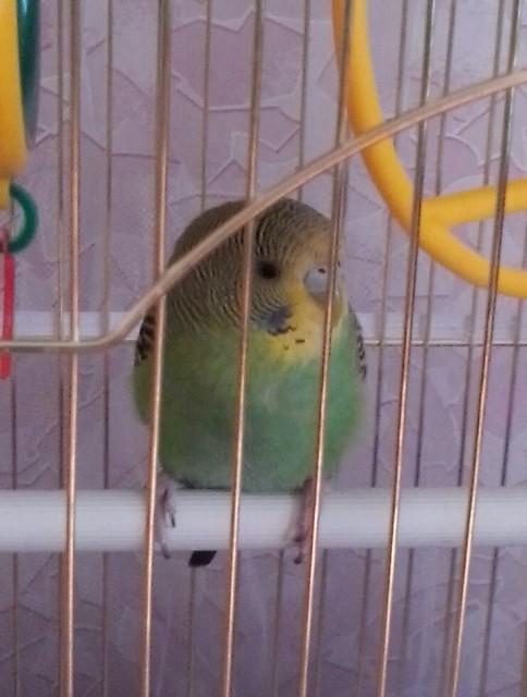 У попугая стала коричневой восковица. - 20140921_165225-1-1.jpg