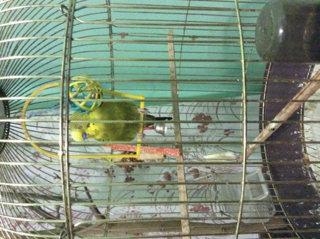 Фото попугайчика - image.jpg