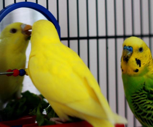 Интресные фотографии попугаев - ijk 032.jpg