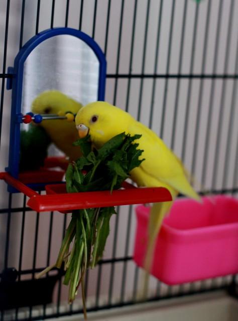 Интресные фотографии попугаев - ijk 041.jpg