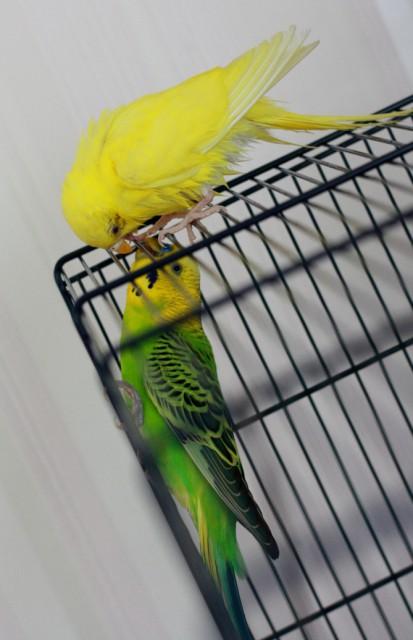 Интресные фотографии попугаев - dngfvc 038.jpg