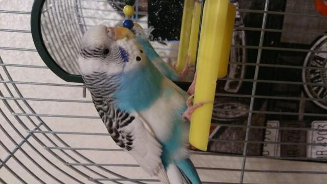 фото птицы - DSC_0243.JPG
