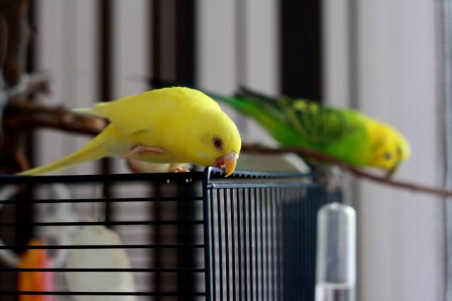 Интресные фотографии попугаев - rd 040.jpg