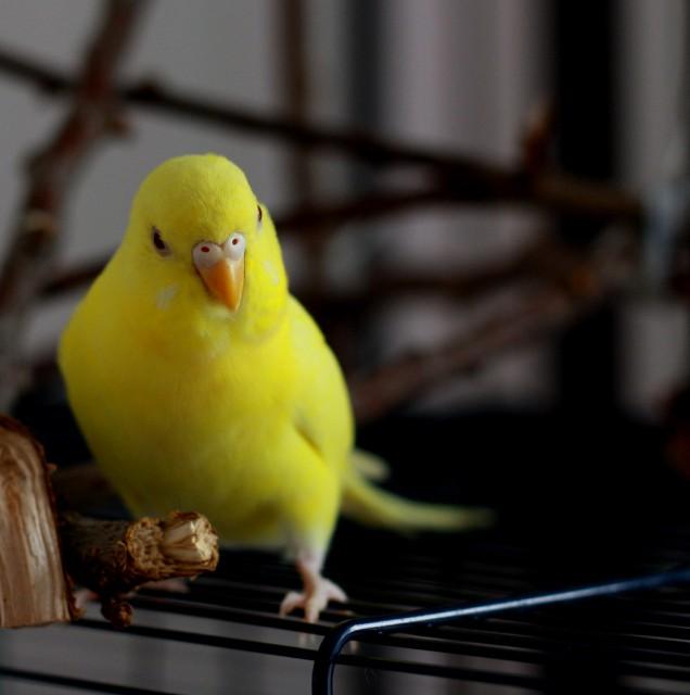 Интресные фотографии попугаев - rd 057.jpg